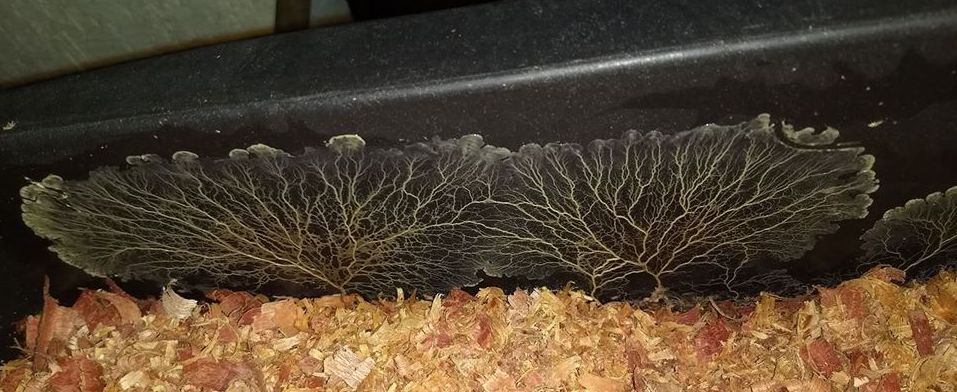 Fungos na Vermicompostagem