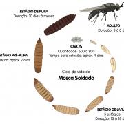 Ciclo da Larva da Mosca Soldado (Morada da Floresta)